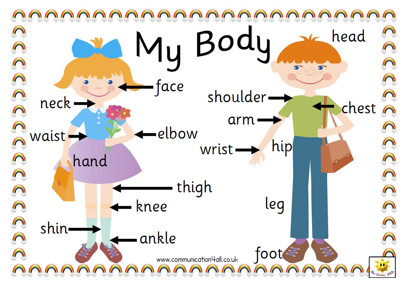 Les parts del cos