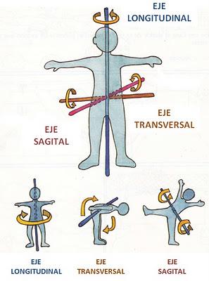 Els girs corporals