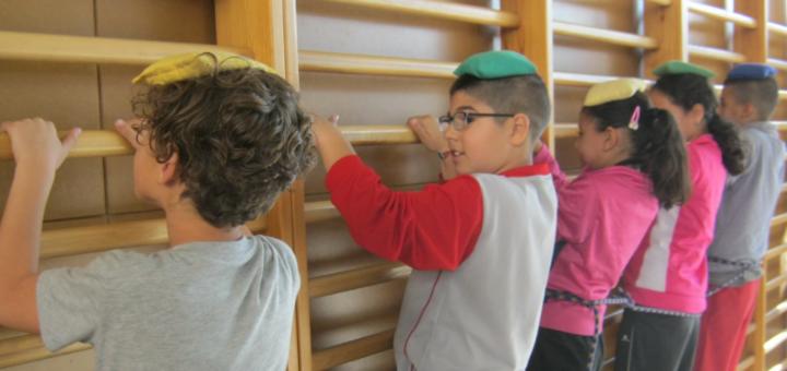 Projecte Formigues Cooperatives a l'escola